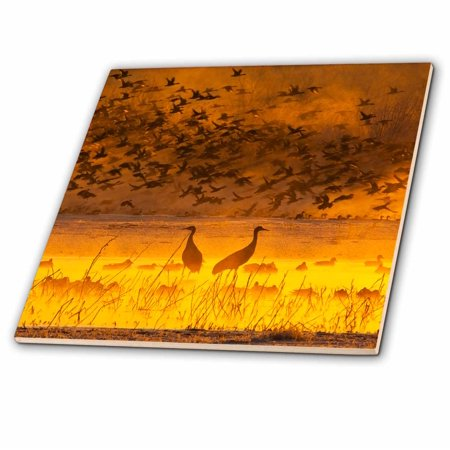 3dRose USA, New Mexico, Sandhill cranes, snow geese birds - US32 BJY0010 - Jaynes Gallery - Ceramic Tile,