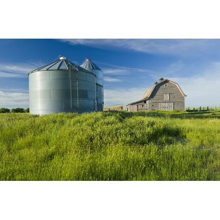 Daves Grain (Old Barn With Metal Grain Bins Ponteix Saskatchewan Canada Stretched Canvas - Dave Reede  Design Pics (19 x 12) )