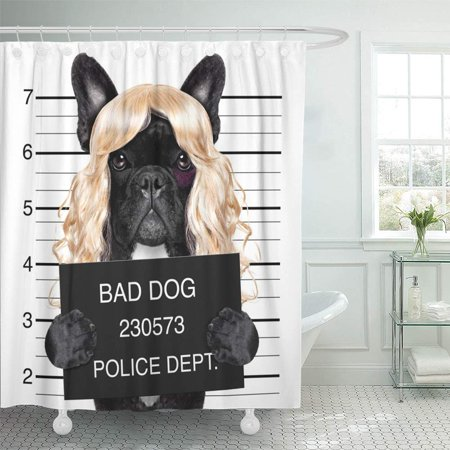 KSADK Diva Lady Girl Dog Posing for Lovely Mugshot  Shower Curtain 66x72 inch (Diva Shower Curtain)
