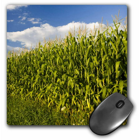 3dRose Corn field farm, Pepperell, Massachusetts - US22 JMO0256 - Jerry and Marcy Monkman, Mouse Pad, 8 by 8 inches