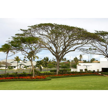 LAMINATED POSTER Canopy Tree Hawaii Garden Lds Temple Grounds Oahu Poster Print 24 x 36 ()