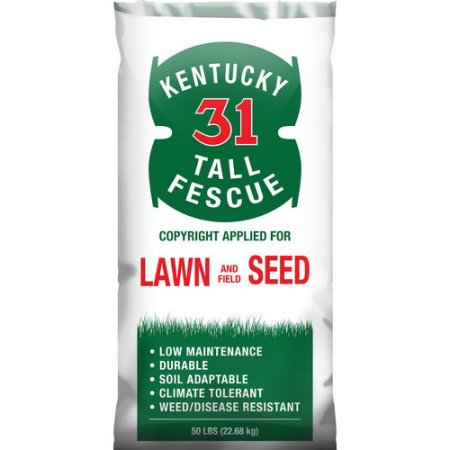 SeedRanch Kentucky 31 Tall Fescue Grass Seed - 50 Lbs.