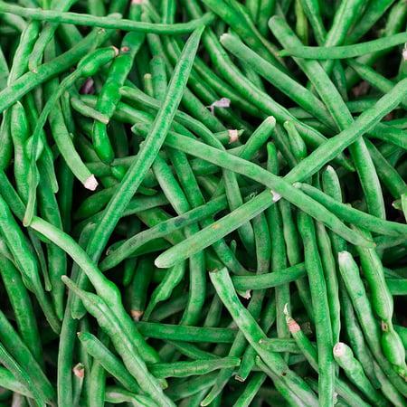 Jade Bush Bean Seeds - 30 Gram Packet - Non-GMO, Heirloom Green Bean Seeds - Vegetable Garden Seeds, Bean Seeds - Bush - Jade - 1 Lb - Phaseolus vulgaris -
