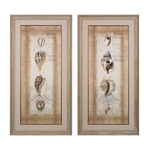 "Sterling Industries 151-023/S2 49"" x 25"" Art Prints - Cartouche and Shells I and"