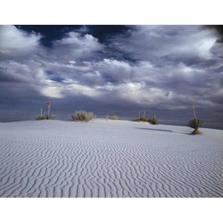 Soaptree Yucca Growing On A Sand Dune In White Sands National Monument New Mexico Canvas Art   Panoramic Images  27 X 9