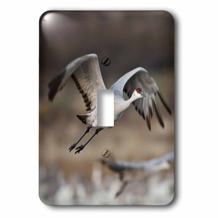 3dRose Sandhill Crane bird takes flight, New Mexico, USA - US32 LDI0040 - Larry Ditto, 2 Plug Outlet Cover