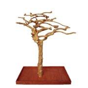 A and E Cage Co. Single Java Tree