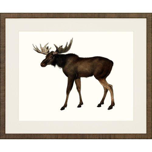 Art Virtuoso American Mammals' Framed Painting by Art Virtuoso