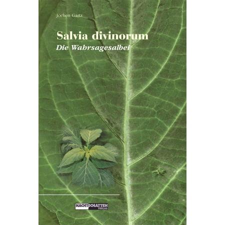 Salvia Divinorum - Die Wahrsagesalbei - (Salvia Divinorum Plants)
