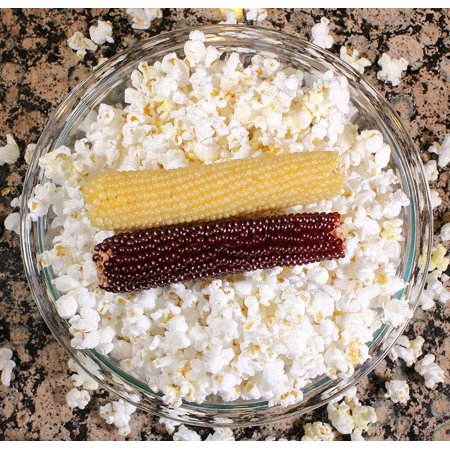 Amish Country Popcorn - Corn Cob Microwave Popcorn (2 Pack Red & White) - All Natural, Gluten Free, and Non GMO - Red Popcorn
