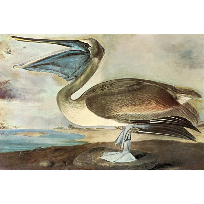 Buy Enlarge Pelican - Paper P12x18