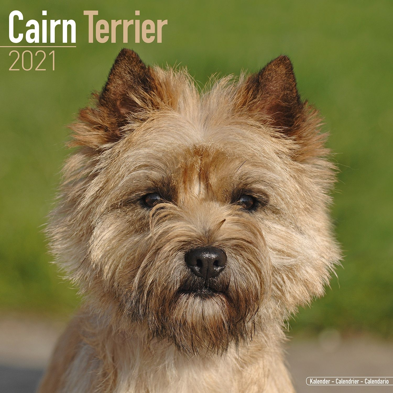 Cairn Terrier Calendar 2021 Cairn Terrier Dog Breed Calendar Cairn Terriers Premium Wall Calendar 2021 Walmart Com Walmart Com