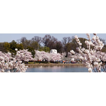 Cherry Blossom trees near Martin Luther King Jr National Memorial Washington DC USA Canvas Art - Panoramic Images (36 x