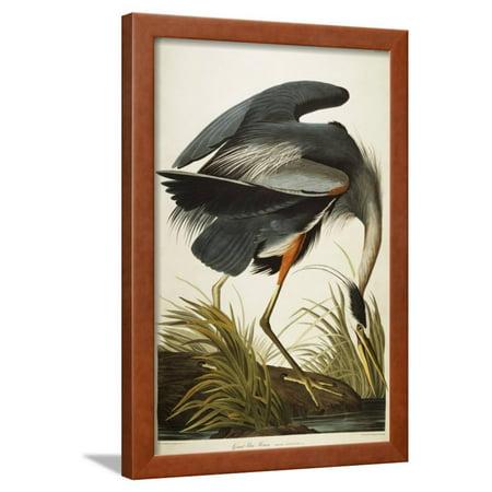 Great Blue Heron Vintage Bird Illustration Framed Print Wall Art By John James Audubon