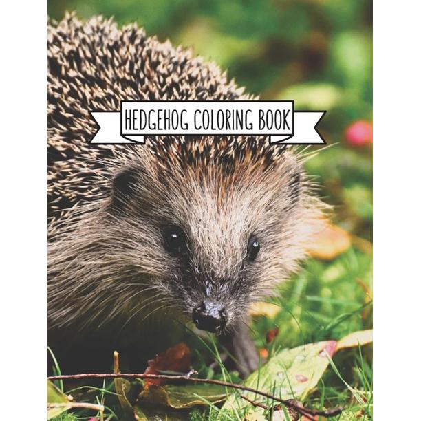 Hedgehog Coloring Book : Hedgehog Lover Gifts for Toddlers ...