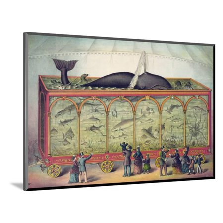 Lithograph Of 19th Century Traveling Aquarium Wood Mounted Print