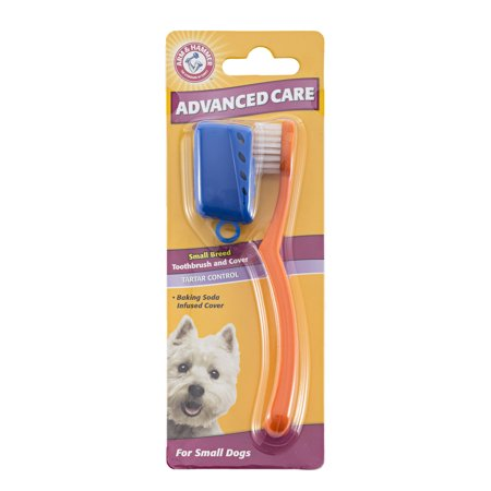 Dogtooth Violet (Arm & Hammer™ Advanced Care Tartar Control Small Breed Toothbrush and Cover For Dogs)
