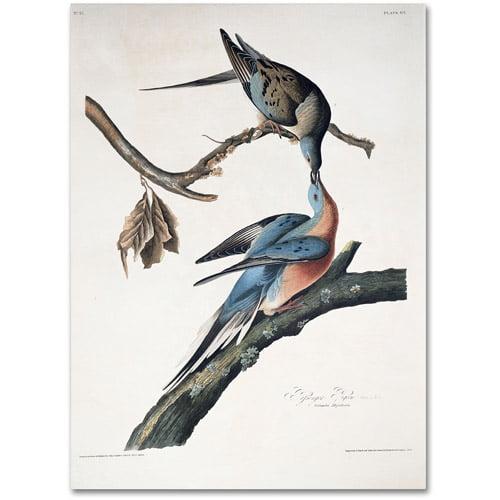 """Trademark Fine Art """"Passenger Pigeon"""" Canvas Art by John James Audubon"""