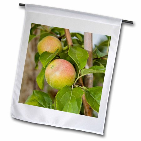 3dRose Apple trees at Robinettes Apple Haus. Grand Rapids, Michigan, USA. - Garden Flag, 12 by
