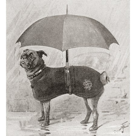 - A Pug Wearing Boots Coat And Umbrella To Protect It From The Rain From The Strand Magazine Published 1896 PosterPrint