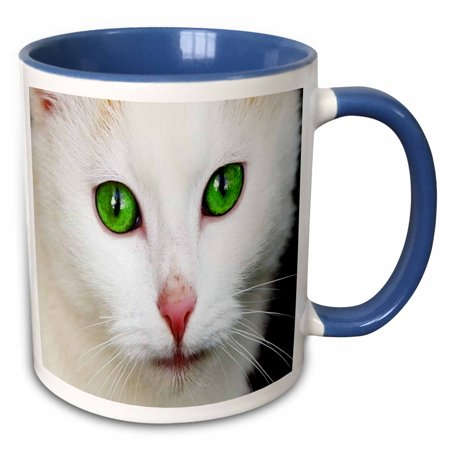 3dRose Pretty Macro White Face Cat With Huge Green Eyes - Two Tone Blue Mug, 11-ounce