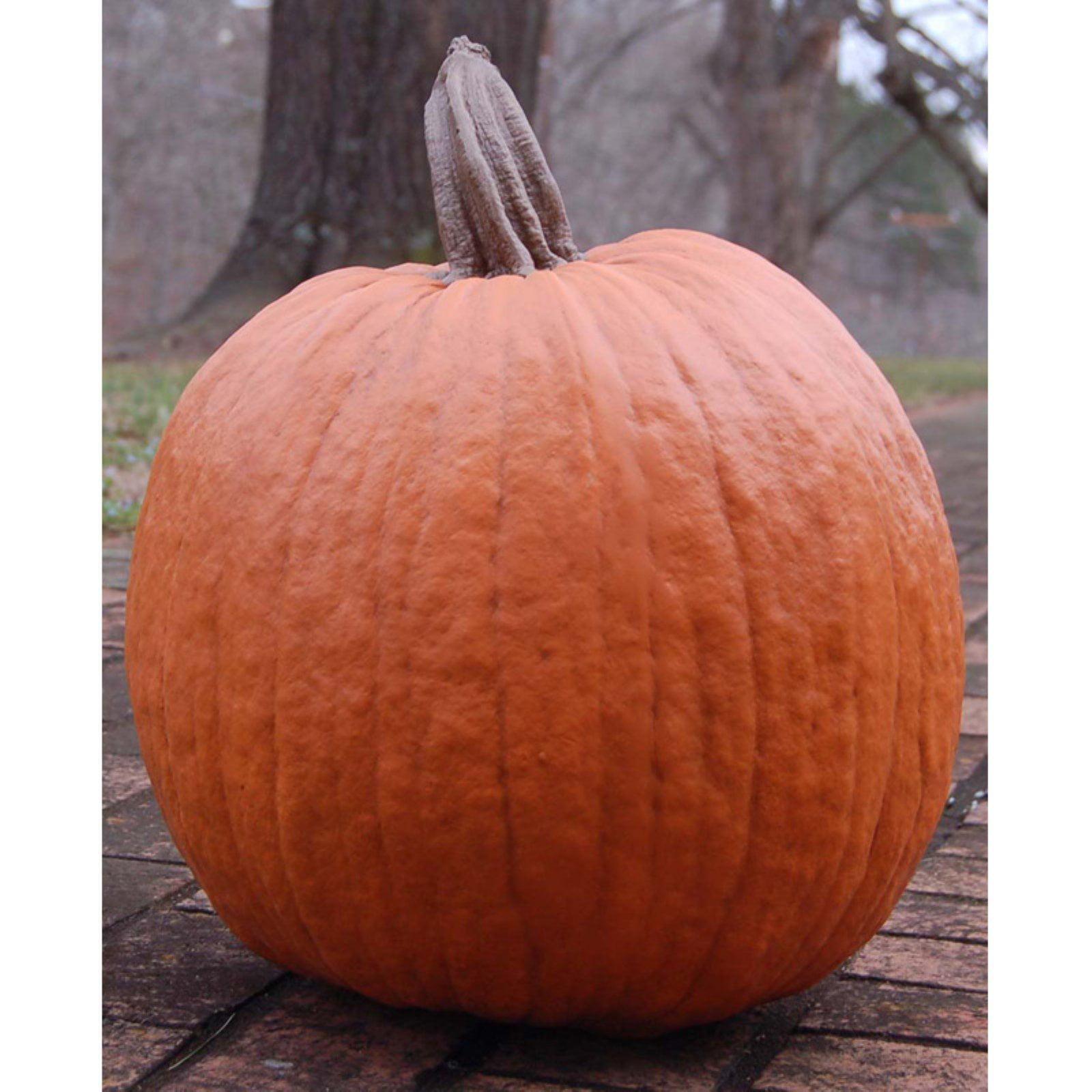 Craft-Tex Ladybug Large Traditional Pumpkin