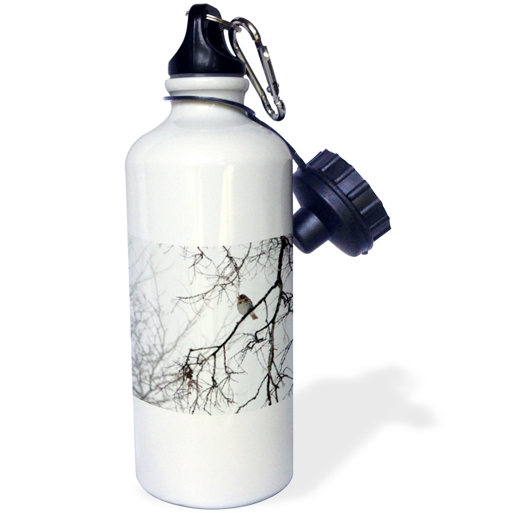 3dRose Sparrow Bird on a Winters Day, Sports Water Bottle, 21oz by Supplier Generic