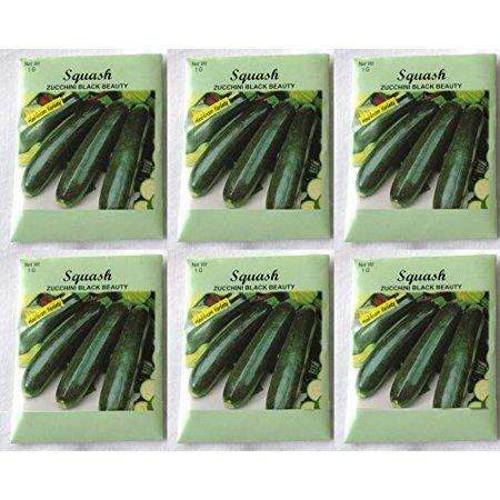 Squash Varieties (Valley Greene (6 Pack) 1 gram/Package Squash Zucchini Black Beauty Heirloom Variety Seeds )