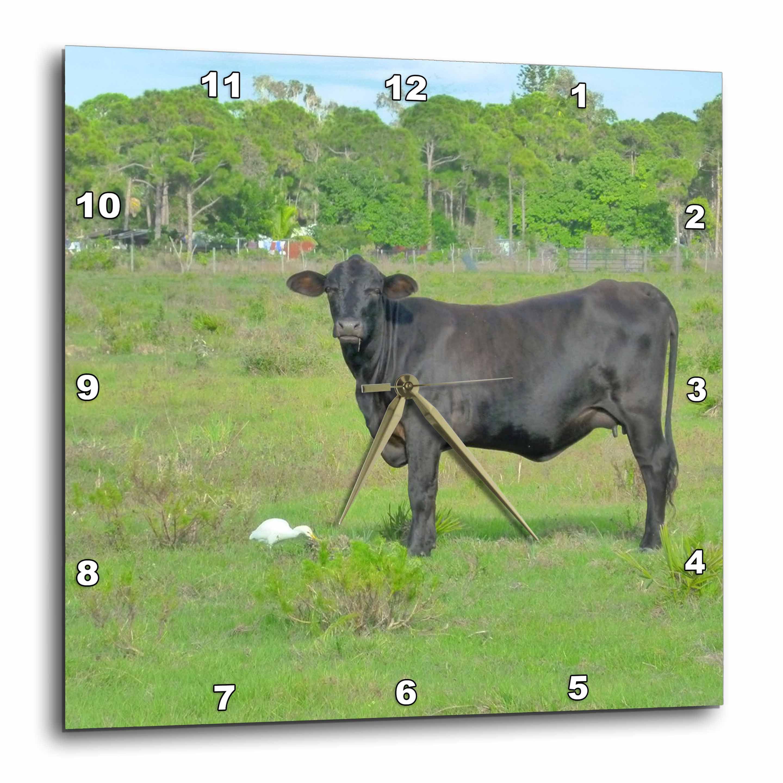 10 by 10-Inch 3dRose dpp/_35411/_1 Black Cow White Bird Green Grass-Wall Clock