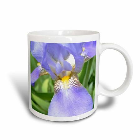3dRose Purple Iris Flower, Ceramic Mug, 11-ounce