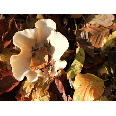 Framed Art for Your Wall Garden Autumn Mushrooms Mushroom Forest 10x13 Frame ()
