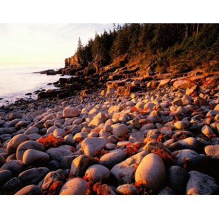 Maine Acadia National Park Poster Print by Panoramic Images (8 x 10) Acadia National Park Maine
