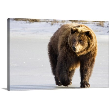 "Great BIG Canvas | ""Grizzly walking in snow at the Alaska Wildlife Conservation Center"" Canvas Wall Art"