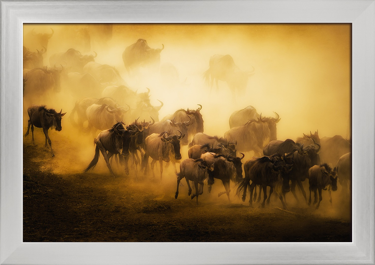 Wildebeest Herd Running Lantern Press Photography 18x12 Giclee Art Print Gallery Framed Silver Wood Walmart Com Walmart Com