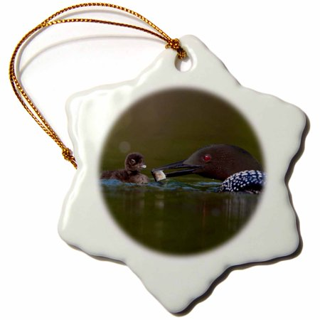 Loon Ornament (3dRose British Columbia, Common Loon, breeding plumage-CN02 GLU0005 - Gary Luhm - Snowflake Ornament, 3-inch)