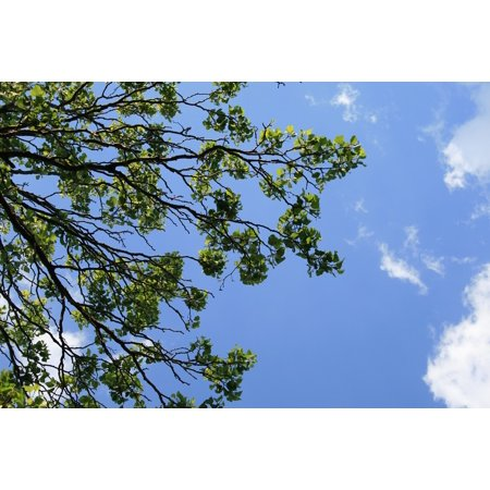 LAMINATED POSTER Green Leaves Clumped Foliage Branches Sky Trees Poster Print 24 x 36