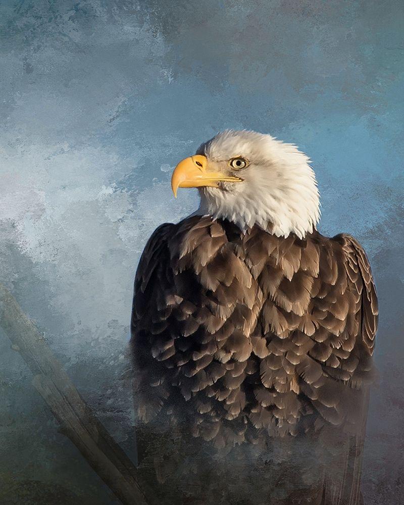 - Bald Eagle Poster Print By Larry McFerrin - Walmart.com - Walmart.com