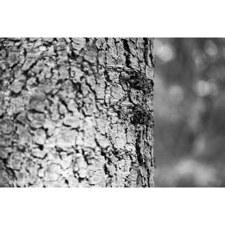 Wood Dead Eye - Canvas Print Memory Dead Wood Era Tree Wood Memories in My Eyes Stretched Canvas 10 x 14