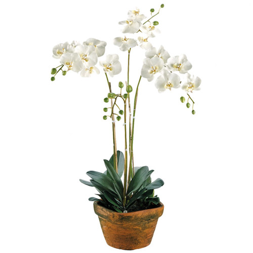 Tori Home 36'' Phalaenopsis Orchid Plant with Terra Cotta Container in White