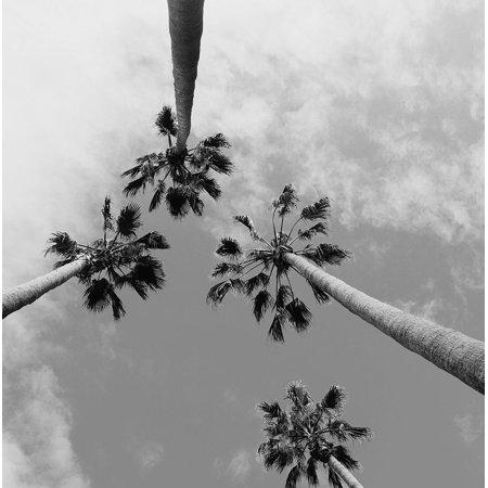 Tropical Gaze Poster Print by Wil Stewart