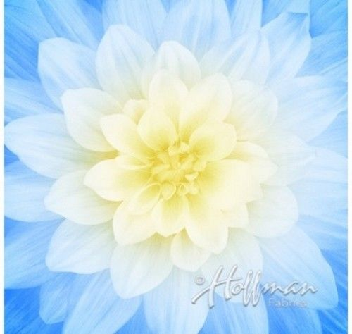 """Dream Big - French Blue 43"""" x 43""""  Digital Floral Panel Cotton Fabric by Hoffman"""