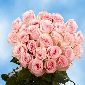 Globalrose 50 Fresh Cut Pink Valentines Roses   Fresh Flowers Express Delivery   Perfect Valentines Day Gift