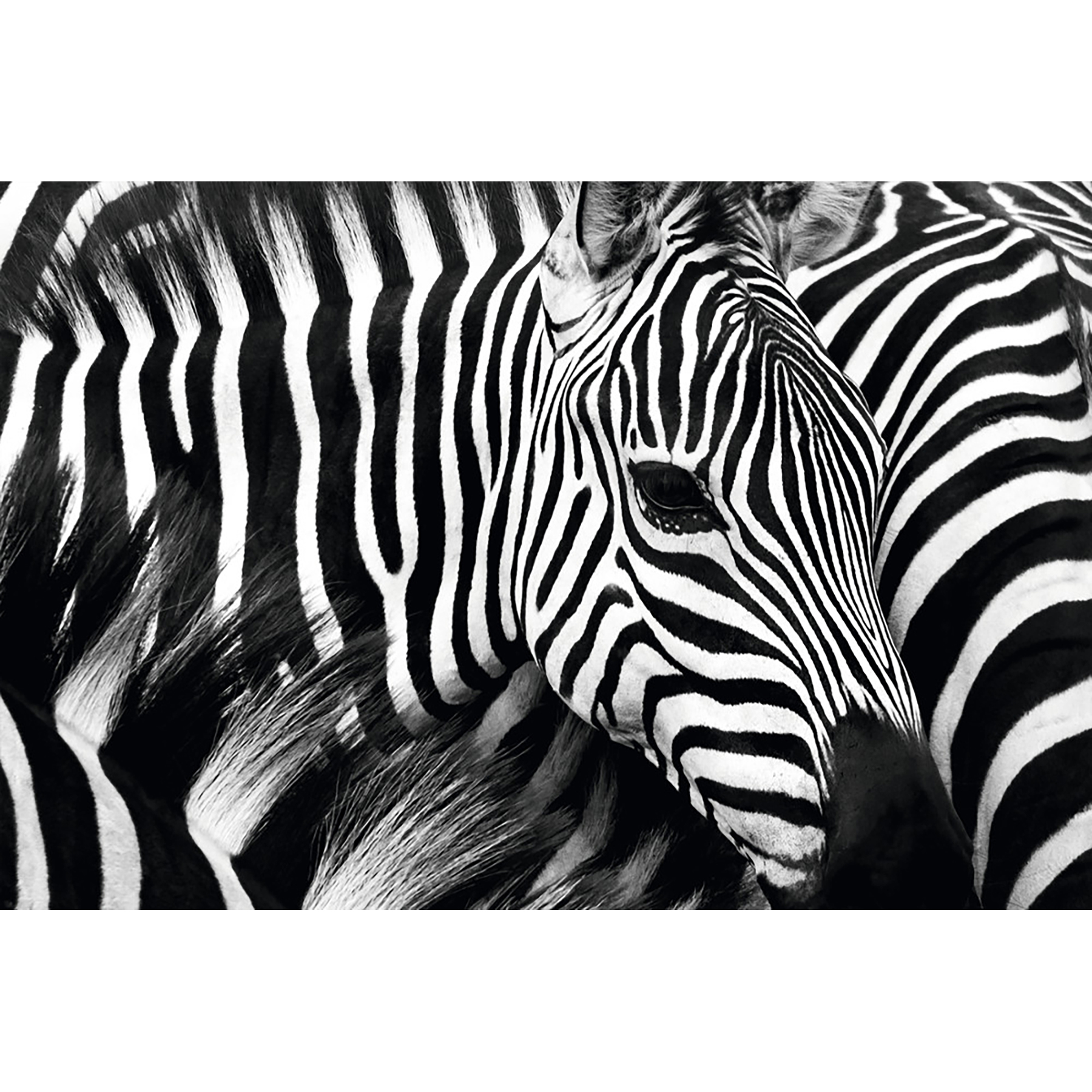 Paperflow Decorative Picture, Zebra