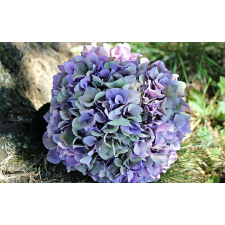 Canvas Print Blossom Bloom Purple Summer Hydrangea Blue Flower Stretched Canvas 10 x