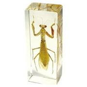 PW307 Paperweight Large Praying Mantis