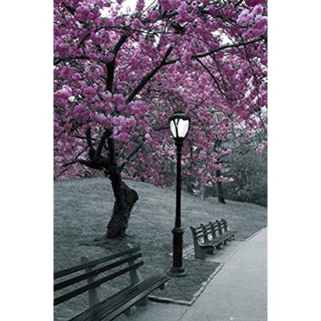 New York Central Park Blossom 36x24 Photograph Art Print Poster Trees  Bloom Violet Black and White NYC New York City Manhattan