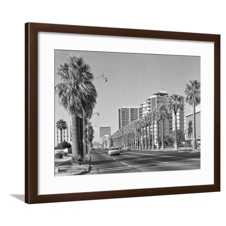 1960s Rows of Palm Trees Central Avenue Phoenix AZ Framed Print Wall