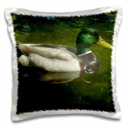 3dRose Mallard Duck Floating Gracefully - Pillow Case, 16 by 16-inch (Ducky Pillow)