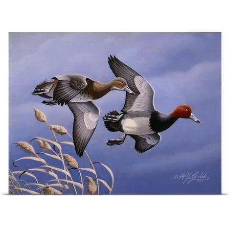 Great BIG Canvas   Rolled Wilhelm Goebel Poster Print entitled Redhead Ducks