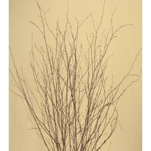 August Grove Natural Birch Branch